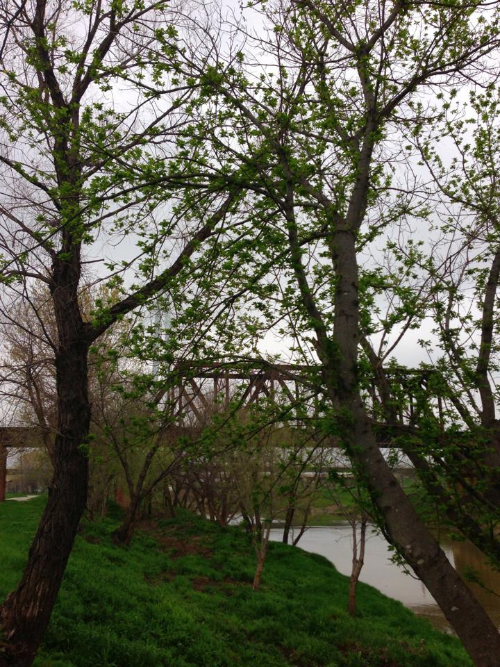 Branches Greening